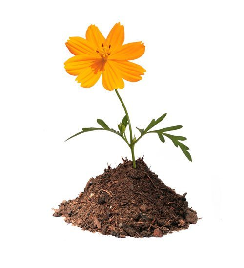 Composting - image of a flowering growing out of a composting pile